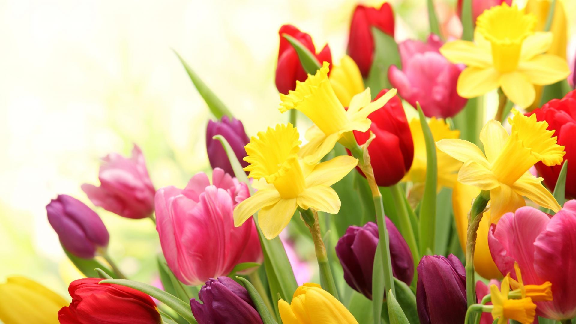 Spring-Flowers--e1489436200534